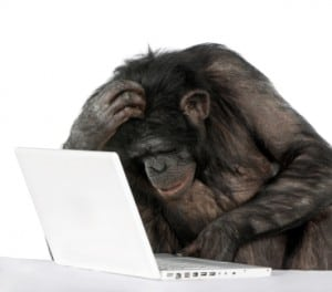 laptop_chimp